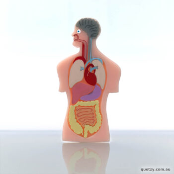 Anatomy Man acrylic brooch handmade by Quetzy