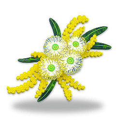 Acrylic brooch of a wattle and leaves with white flowering eucalypt blossum. Created and designed by Quetzy